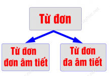 tu-don-da-am-tiet-la-gi